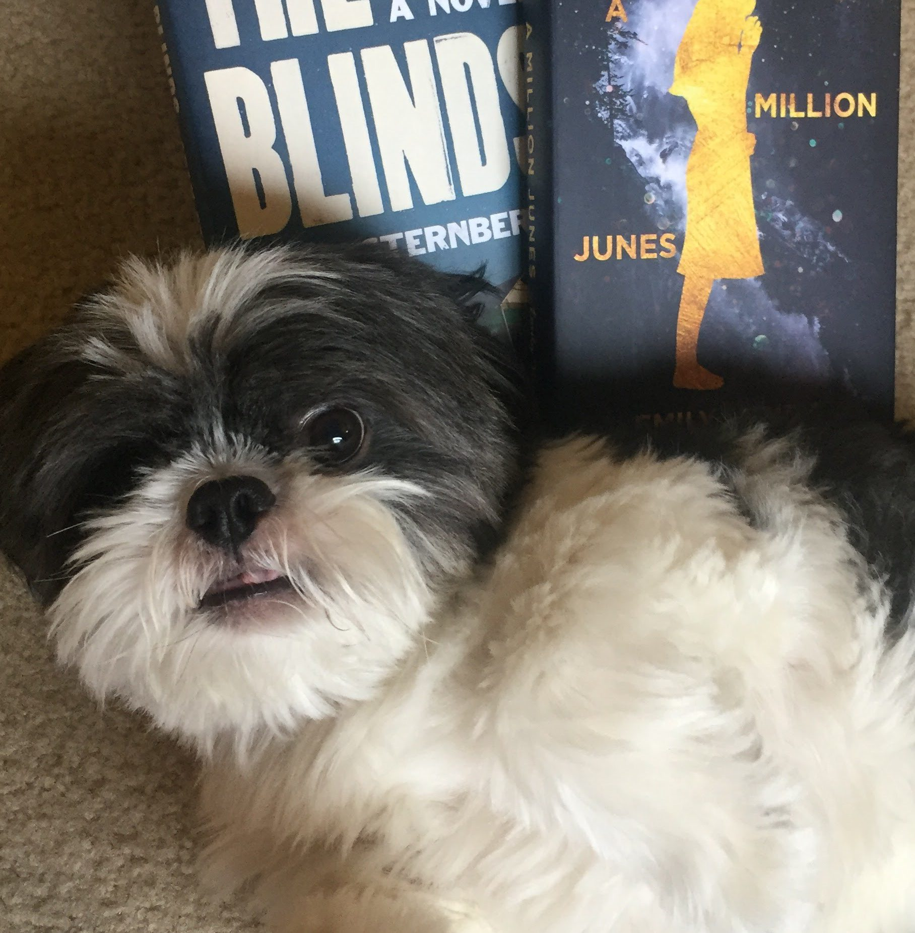 Shih Tzus & Book Reviews